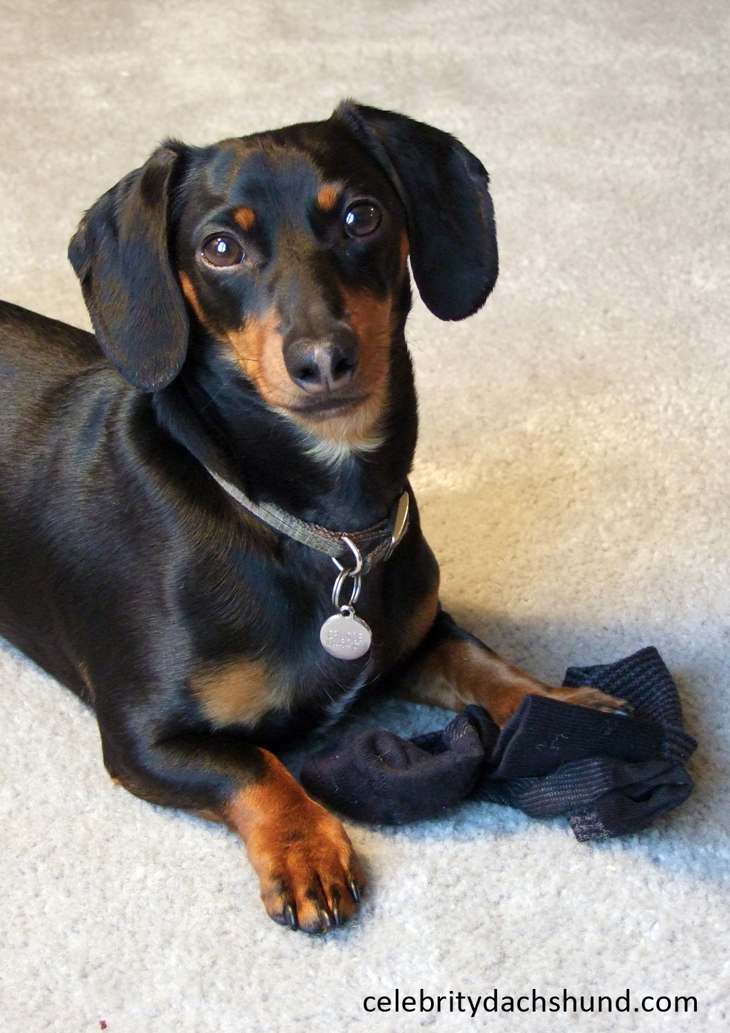 Wiener Dog Sock