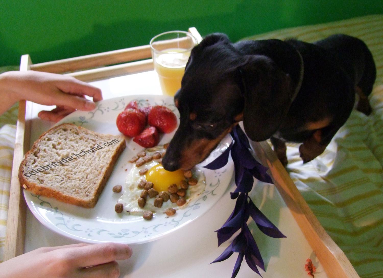 Αυτό το νομοσχέδιο είναι πρωινό σκύλου...
