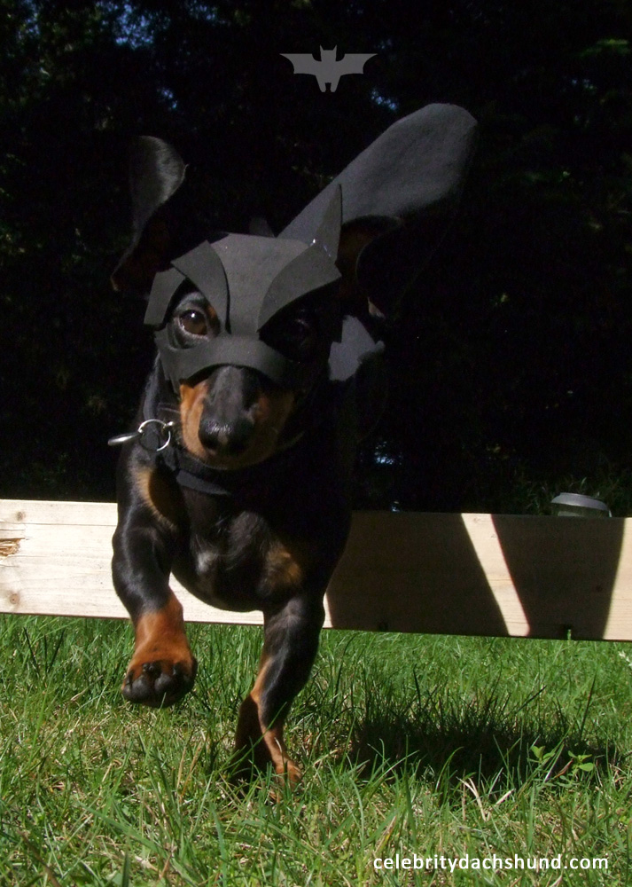 best batdog dog costume batman